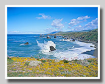 California Coast & Coastal Redwoods Gallery
